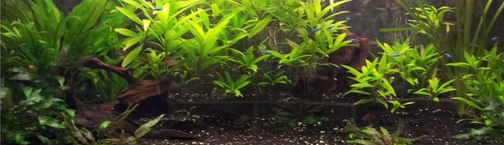 Ackis Aquarium